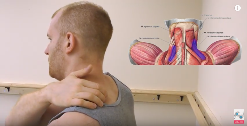 Levator Scapulae Pain - Physical Therapy 101